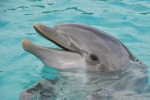"""Dolphins!  """"See the World...with SeaWorld"""" (ages 3-10)"""