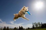 Flying High Dogs: Outdoor event- held at the VVP