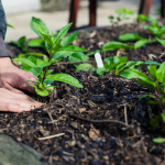 Virtual Adult Program - Getting Started in Your Garden with Backyard Growers