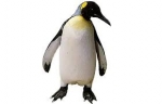 """Penguins!  """"See the World...with SeaWorld"""" (ages 3-10)"""