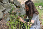Foraging for Wild Plants with Amanda Stanley