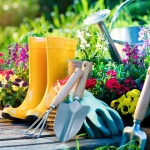 Organic Gardening I