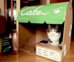 Build Your Cat a Castle