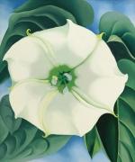Pastel Paint the 45-Million-Dollar Flower