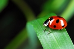 Early Release Program: Hands on Nature: Creepy Crawly Creatures! - Grades K & up