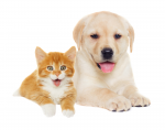 Teen Library Council National Pet Day Help