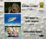 VIRTUAL Sensational Snakes! The Joys of Nature (recommended for pre-K - 5th grade)