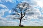 Virtual Genealogy Club