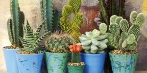 Cactus and Succulent Potting Workshop