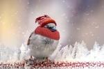 Drop In Bird Feeders
