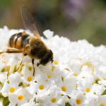 Bees in the D: My Pollinator Garden (Plymouth District Library Virtual Program)