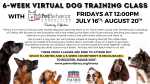 6-Week Virtual Dog Training Class with Pet Behavior Consulting