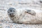 Seacoast Science Center: SSC Marine Mammal Rescue