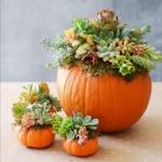Succulent Pumpkin Centerpieces