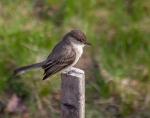 VIRTUAL PROGRAM: Identifying & Attracting Backyard Birds