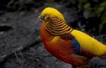 Bizarre Birds of the World