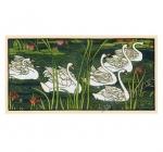 Swans puzzle