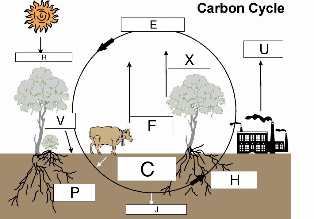 Cycles of matter lesson 0033 tqa explorer identify photosynthesis ccuart Image collections