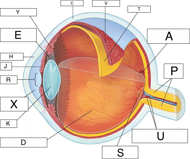 Vision And The Eye Lesson 1063 Tqa Explorer
