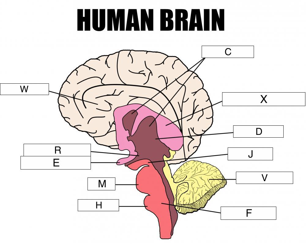 the nervous system (lesson 0398) - TQA explorer