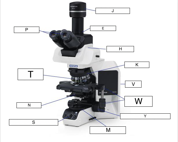 The microscope lesson 0362 tqa explorer a body tube b revolving nosepiece c stage d arm ccuart Images