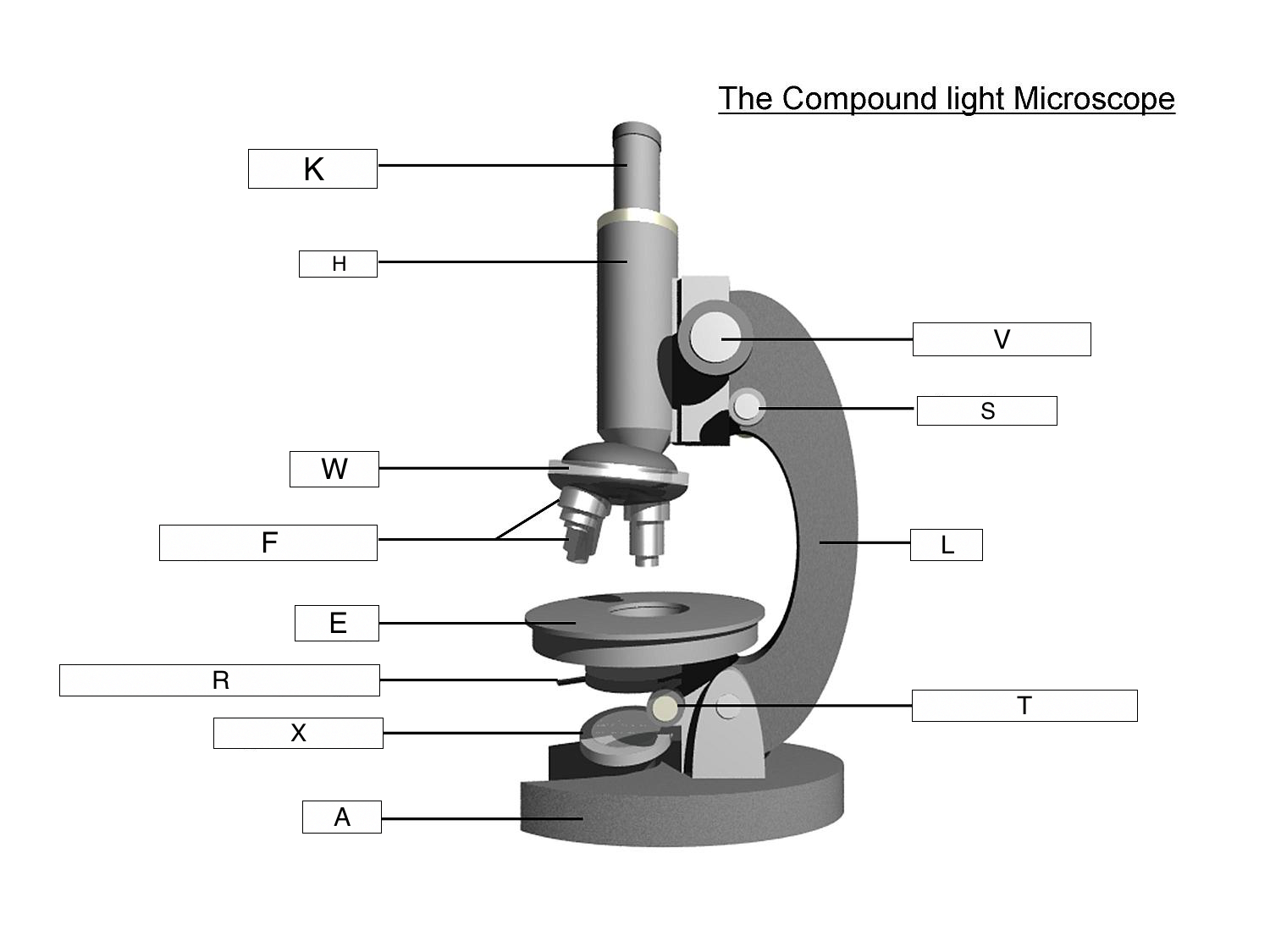 The microscope lesson 0362 tqa explorer questionimage ccuart Gallery