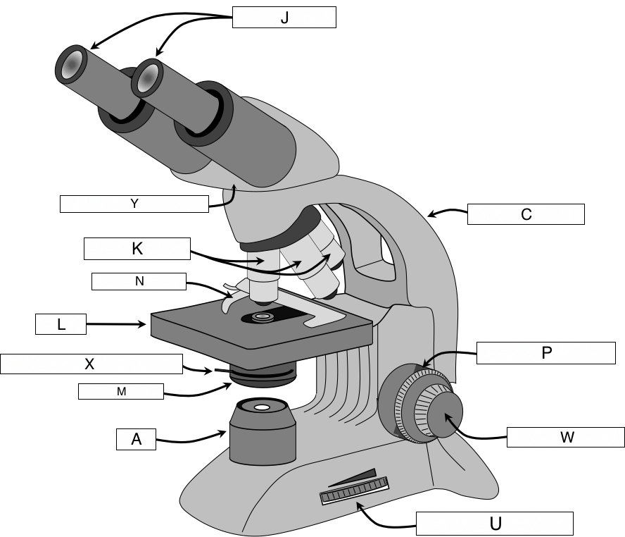 The microscope lesson 0362 tqa explorer where would you put your eyes to view something through the microscope ccuart Images