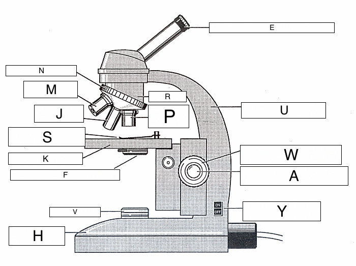 The microscope lesson 0362 tqa explorer what does the y symbol indicate in the diagram ccuart Image collections