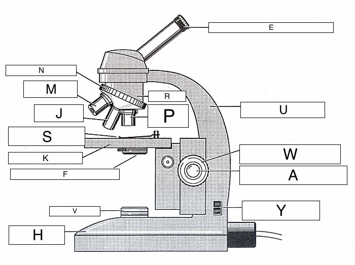 The Microscope Lesson 0362 Tqa Explorer