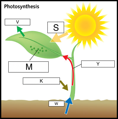 Photosynthesis lesson 0424 tqa explorer questionimage ccuart Image collections