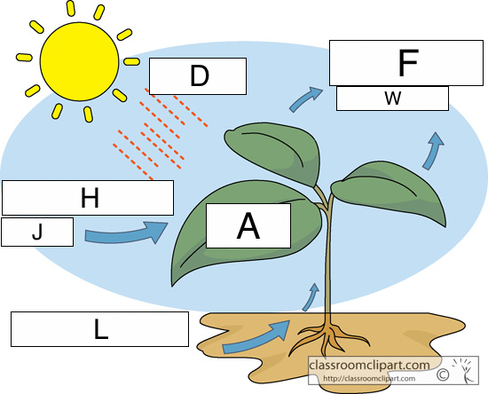 Blank plant diagram photosynthesis online schematic diagram photosynthesis lesson 0424 tqa explorer rh data allenai org blank carbon cycle diagram worksheet simple photosynthesis ccuart Image collections