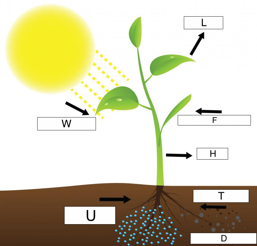 photosynthesis diagram of a plant photosynthesis (lesson 0424) - tqa explorer diagram of a wheat plant #12