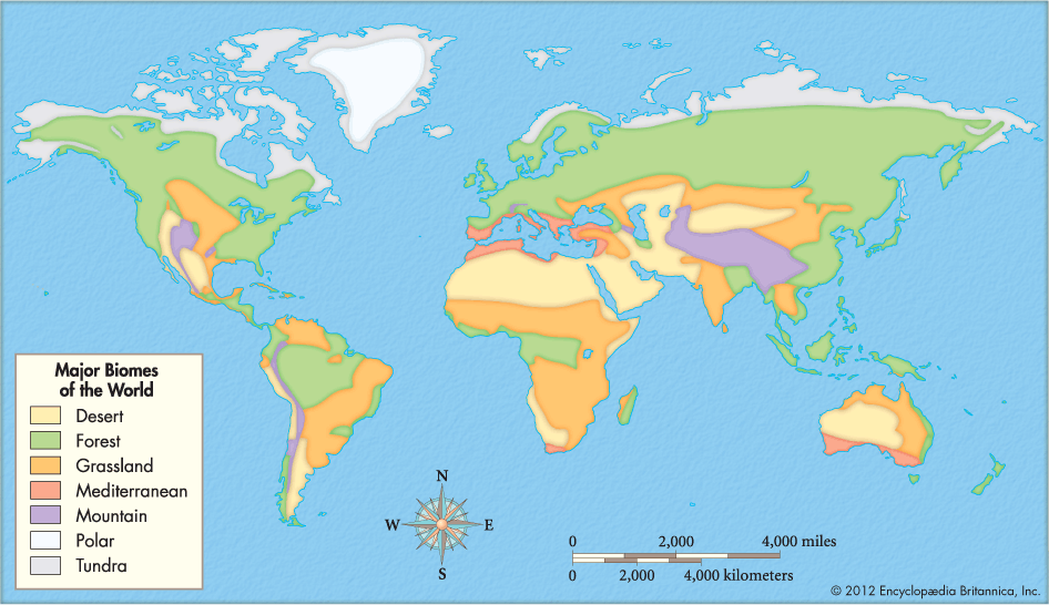 Climate zones and biomes lesson 0111 tqa explorer from the diagram which biome has the largest surface area gumiabroncs Images