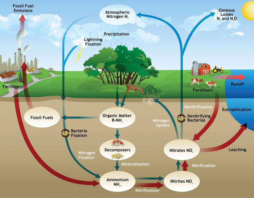 Cycles of matter lesson 0033 tqa explorer a nitrogen cycle b water cycle c carbon cycle d bicycle ccuart