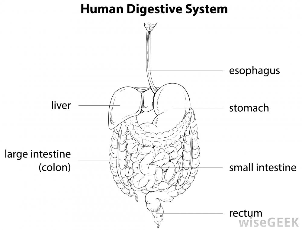 The Digestive System Lesson 0389 Tqa Explorer