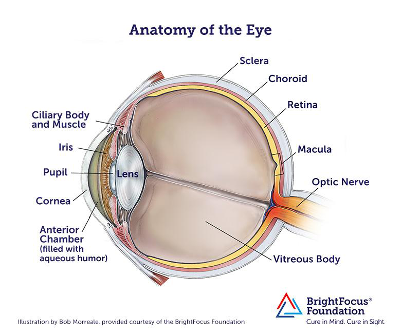 Vision and the eye lesson 1063 tqa explorer 6 b 5 c 11 d 4 ccuart Image collections