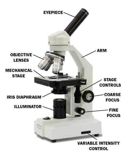 The microscope lesson 0362 tqa explorer what part of a microscope holds your sample ccuart Gallery