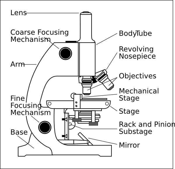 The microscope lesson 0362 tqa explorer a mechanical stage b eyepiece c objective lenses d arm ccuart Image collections