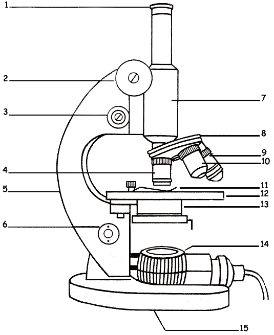 The microscope lesson 0362 tqa explorer questionimage ccuart Image collections