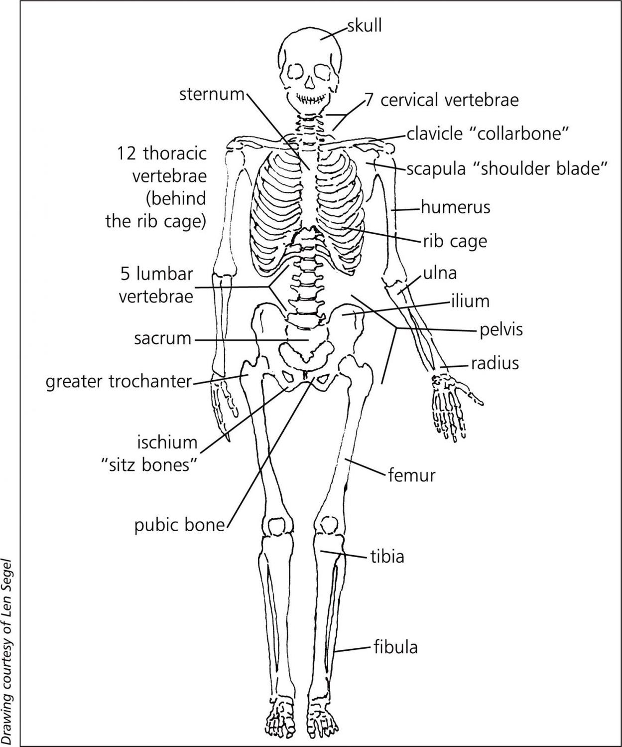 the skeletal system (lesson 0385) - TQA explorer
