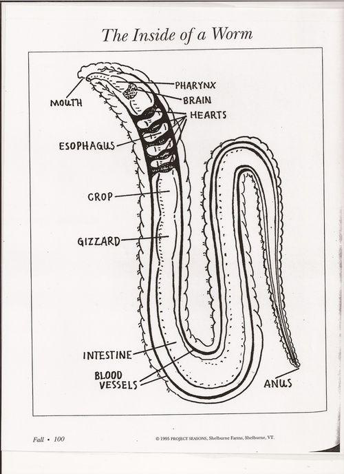 flatworms and roundworms  lesson 0370