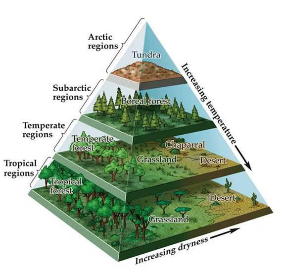Climate zones and biomes lesson 0111 tqa explorer for Soil zone definition