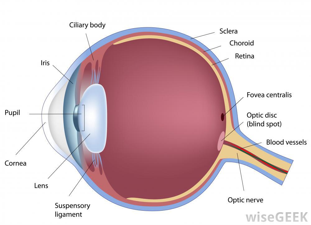 Vision and the eye lesson 1063 tqa explorer descriptionimage ccuart Choice Image