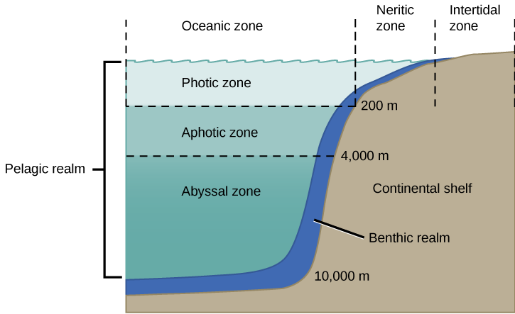 introduction to the oceans (lesson 0017) tqa explorer Pelagic Zone Fish description_image