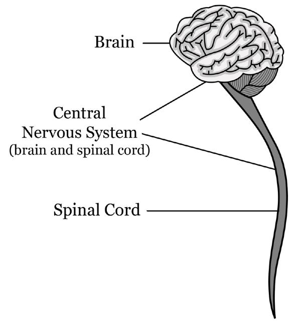 Central Nervous System Lesson 0483 Tqa Explorer