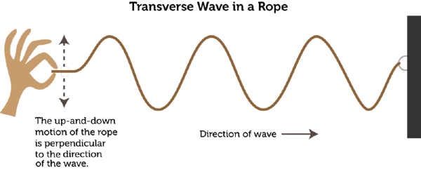 Transverse Wave Lesson 1054 Tqa Explorer