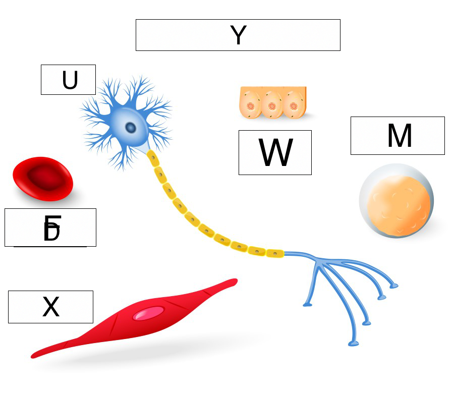 types of cells
