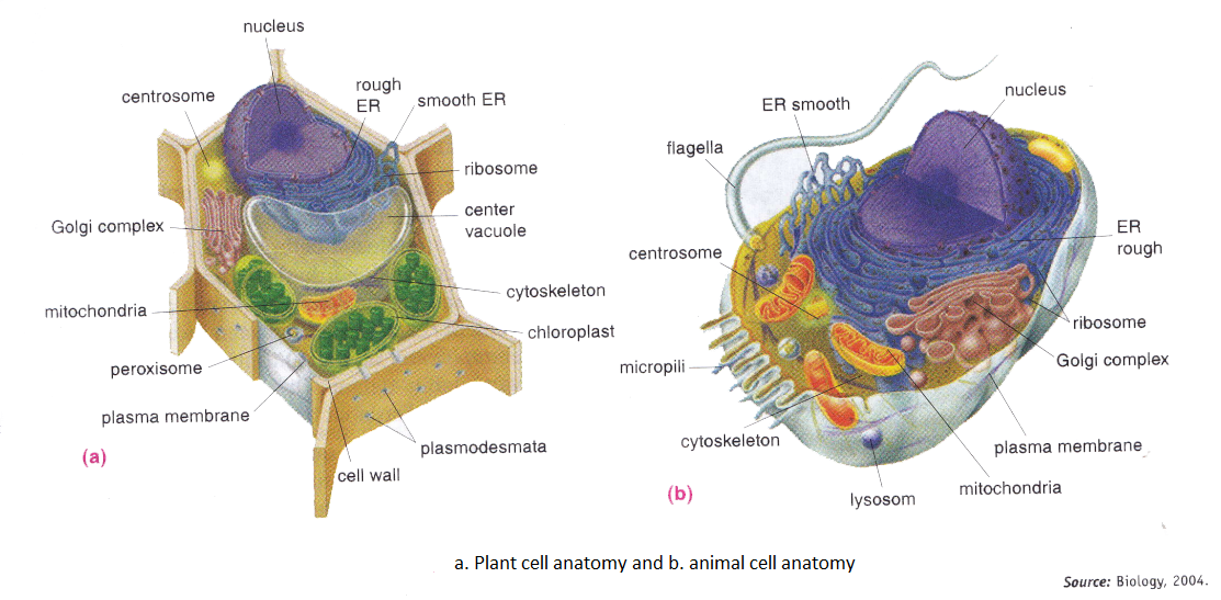 Cell structures lesson 0422 tqa explorer ccuart Images