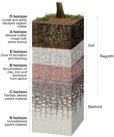 Soil layers images galleries with a bite for Soil horizons