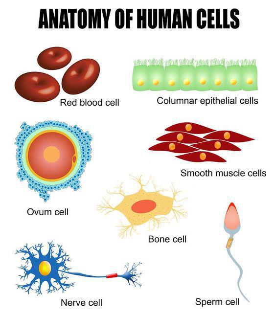 Cell biology lesson 0475 tqa explorer descriptionimage ccuart Choice Image